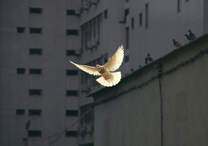 Barış İdealizminin İflası, Militarist Kültürün Zirvesi ve Muhtemel Sonuçları